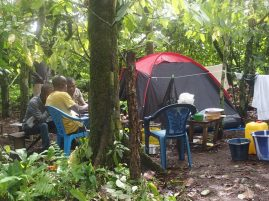 Camping at the cacao plantation